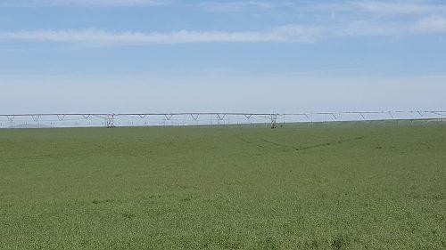Dauntless PRG Field