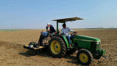 Fall planting observation plots