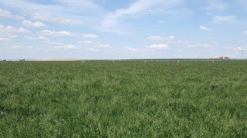 Prafin KBG Field